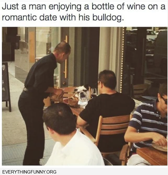 funny captions just a man enjoying a good bottle of wine with his dog at the table