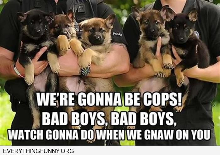 funny puppy k9 police dogs bad boys whatcha gonna due when i gnaw on you