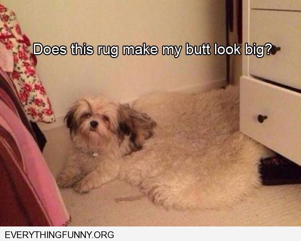 funny caption dog does this rug make my butt look big