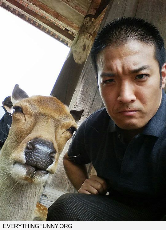 funny caption man imitates angry deer cow face