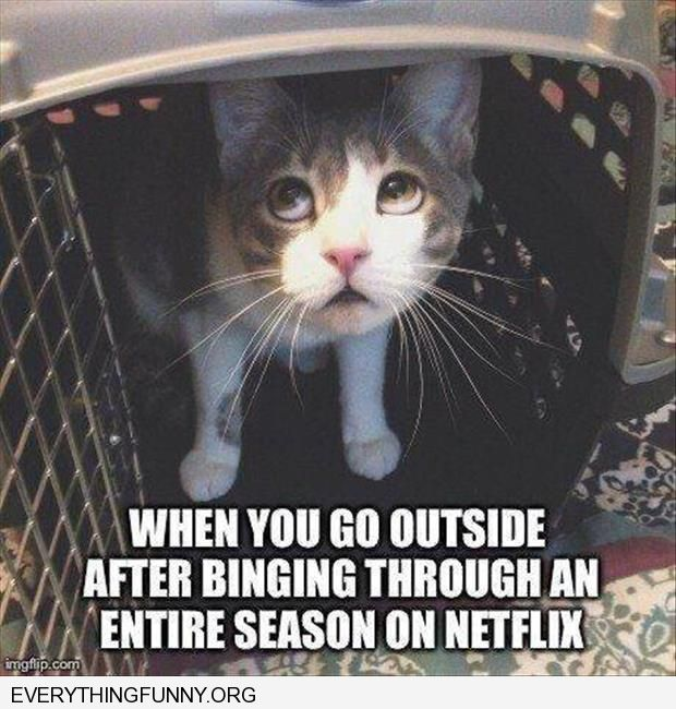funny cat peeking out when you go outside after binging through an entire season on netflix