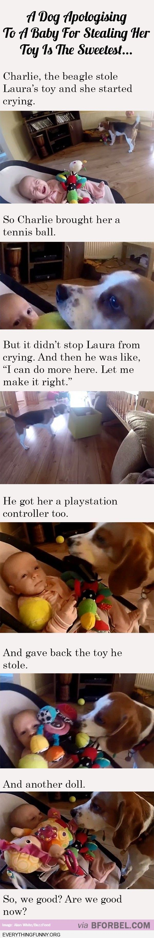 funny caption adorable dog took babies toy brings the baby everything it can to make it happy again