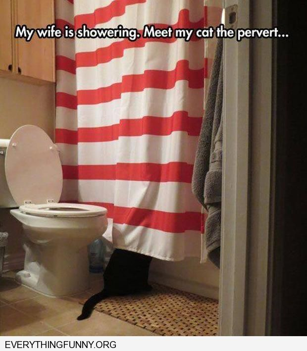 funny caption wife taking shower cat watches under shower curtain pervert