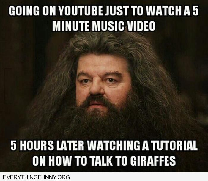 funny captions going on youtube to watch a 5 minute music video 5 hours later watching a video on how to talk to giraffes