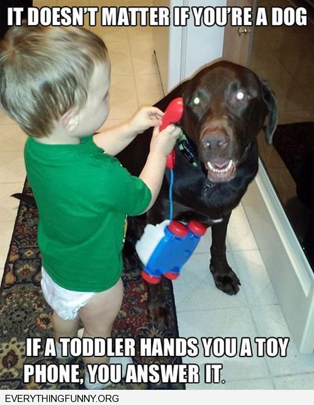 funny caption it doesn't matter if you're a dog if a toddler gives you a phone you answer it