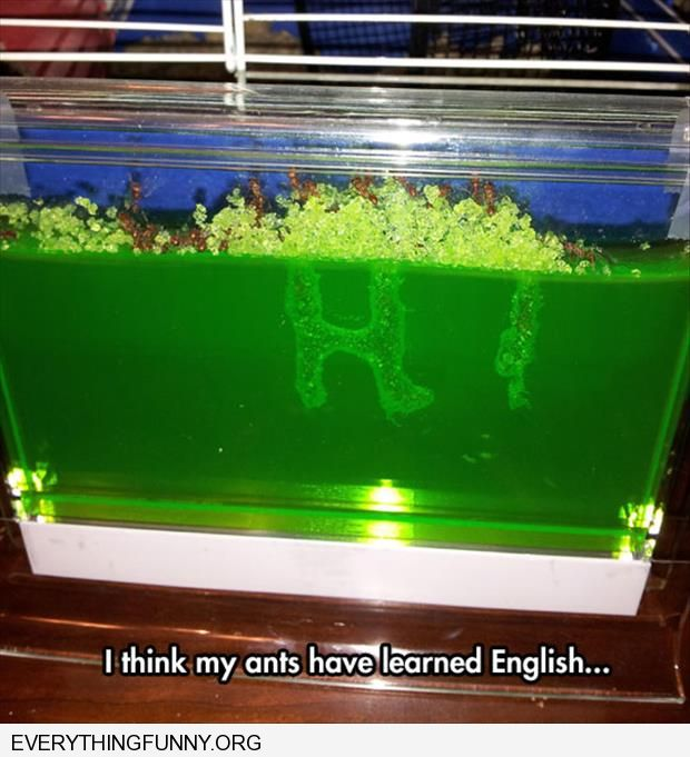 funny ant farm spells hi learned how to speak english