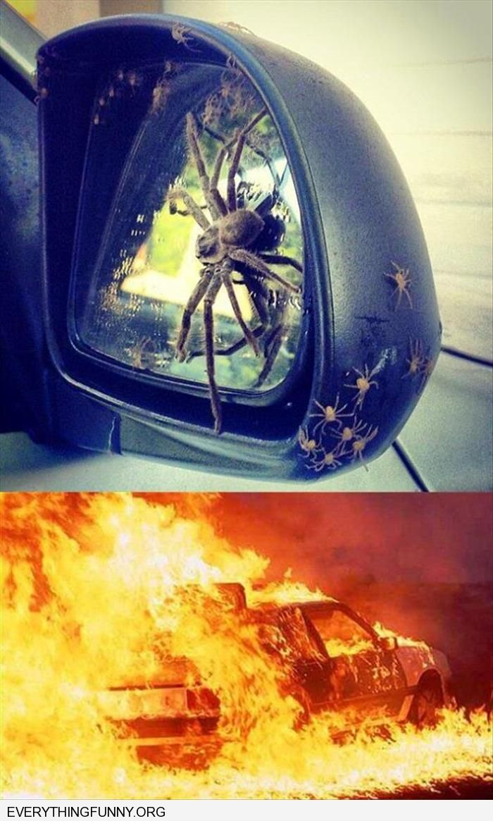 funny caption huge spider and family baby spiders on car mirror burn the car