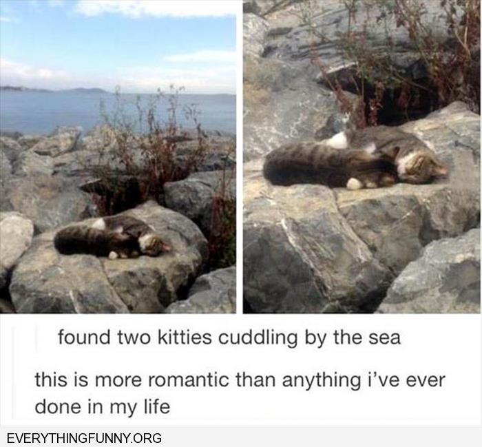 funny caption two cats cudding on rock this is the most romantic picture i have ever seen