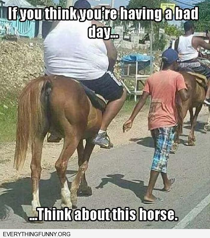 funny caption you think you are having a bad day think about this horse carrying very heavy man
