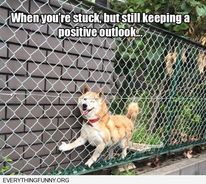 funny dog stuck in fence still  happy keeping a positive outlook