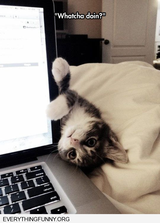 funny cat head upside down by computer whatcha doing