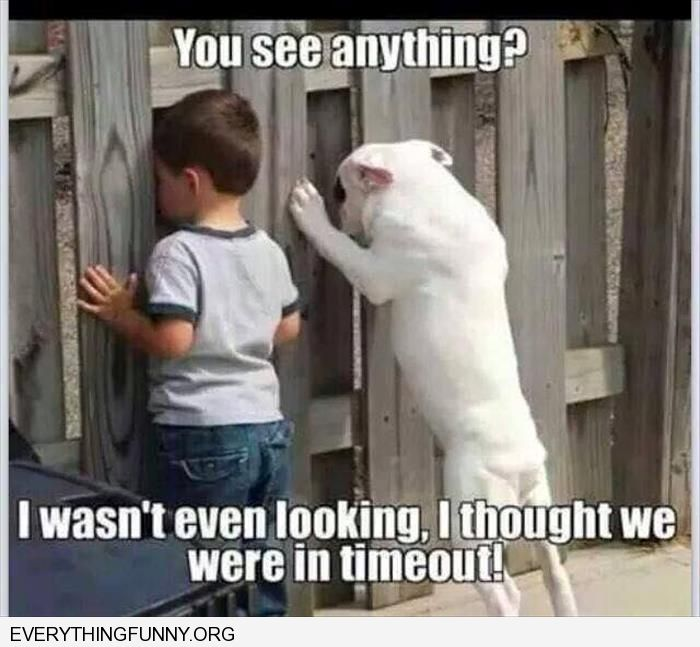 funny caption boy dog looking out fence do you see anything I wasn't looking i thought we were in time out