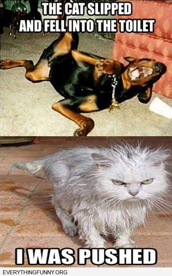 funny caption dog laughing cat fell in toilet cat pissed i was pushed