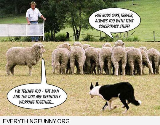 funny caption sheep conspiracy the man and dog are working together