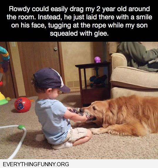 funny caption adorable golden retriever plays gently with two year old