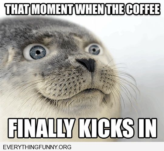funny caption funny seal picture when the coffee suddenly kicks in