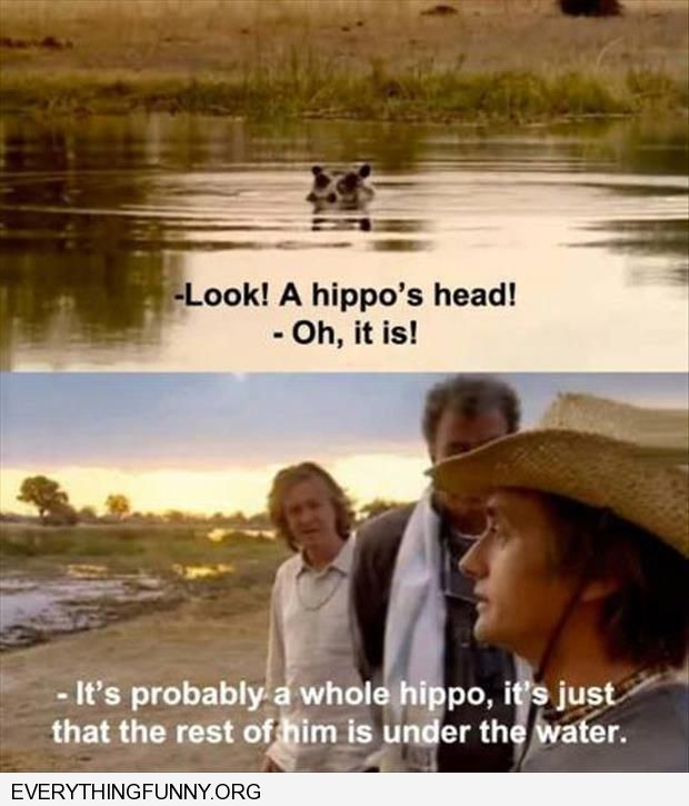 funny caption look a hippos head it's probably a whole hippo the rest is under water