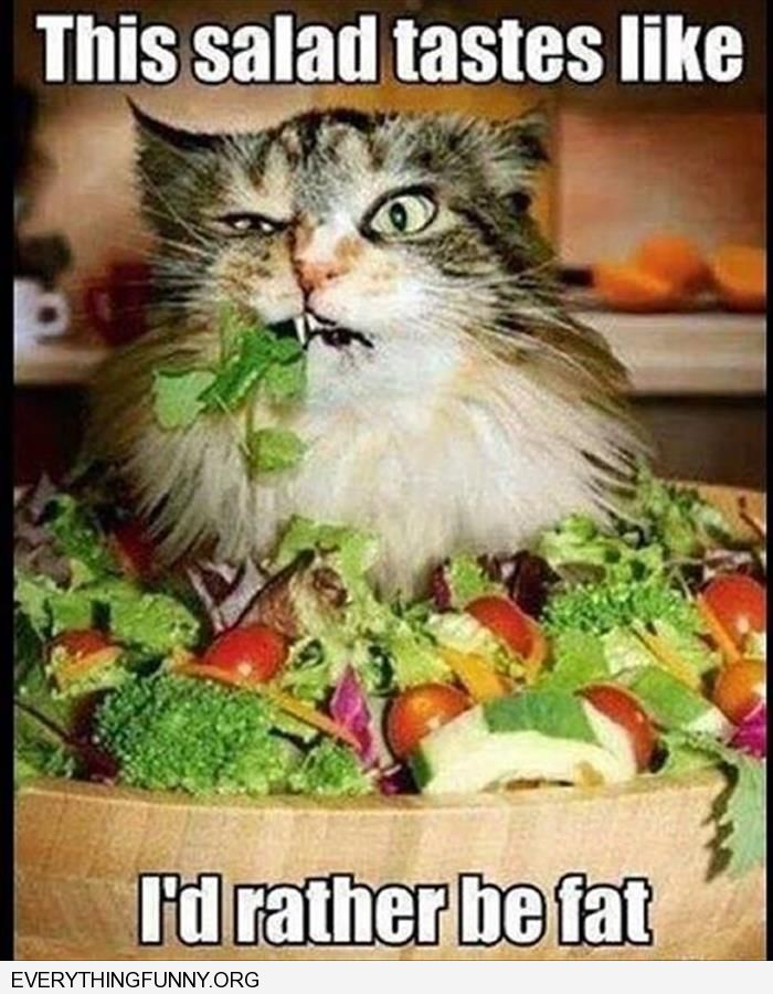 funny caption this salad tastes like i'd rather be fat