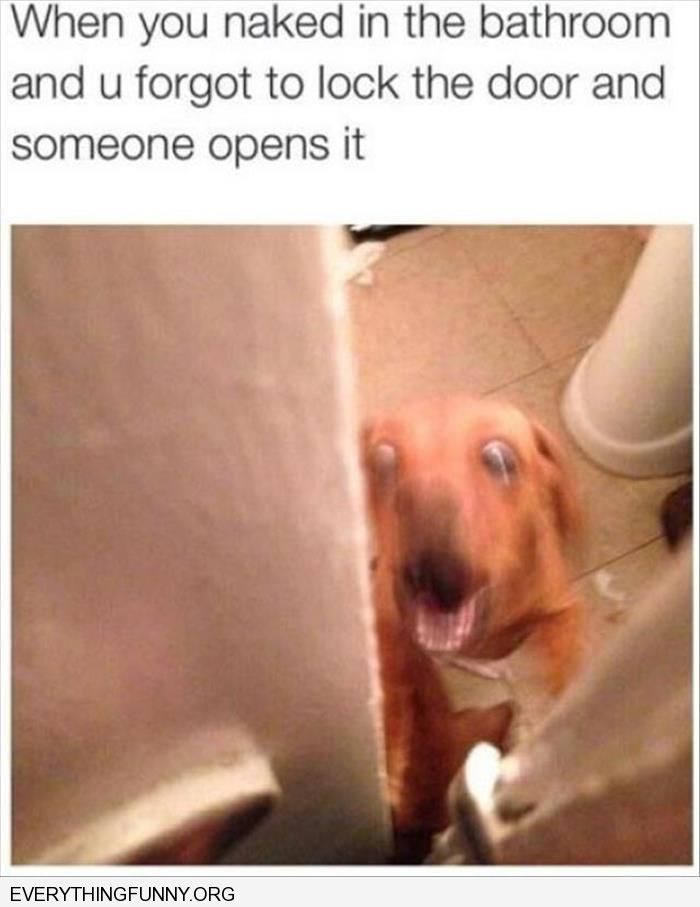 funny when you forgot to lock the bathroom door dog looks shocked