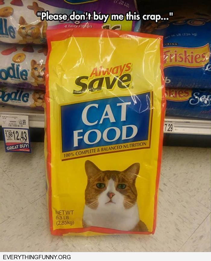funny sad cat on bag of cheap cat food please don't buy me this crap