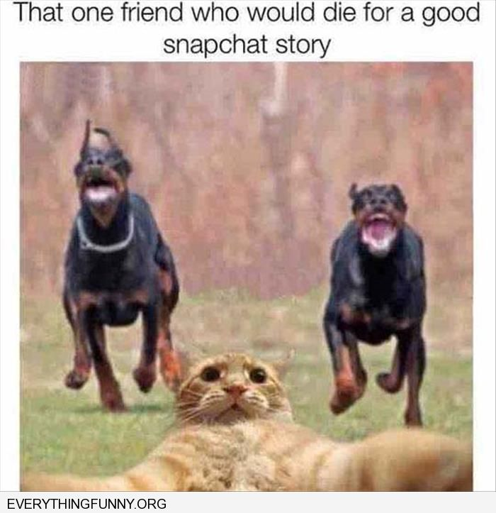 funny caption funny cat taking picture with 2 dogs chasing it