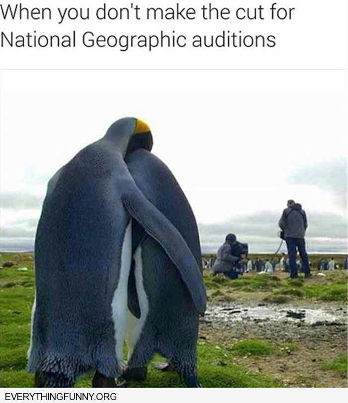 funny caption two sad penguins when you don't make the cut for national geographic auditions