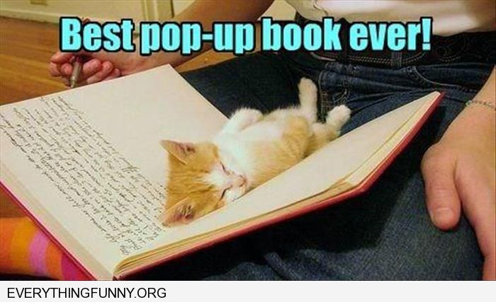 funny caption kitten sleeping in middle of book best pop up book ever