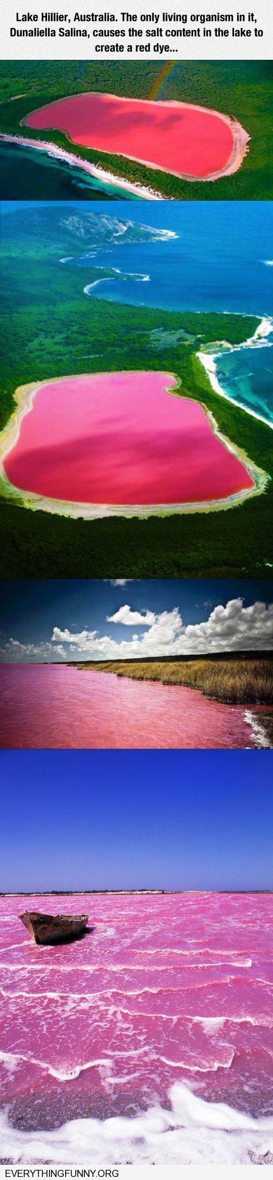 funny photo lake hillier Australia red pink lake