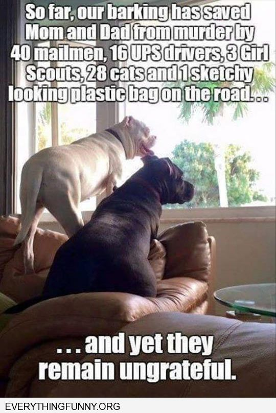 funny caption dogs thinking they are unappreciated protected family
