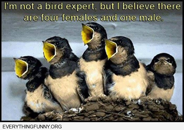 funny caption not a bird expert but guessing 4 female one male