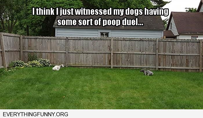 funny caption looks like my dogs are having a poop contest