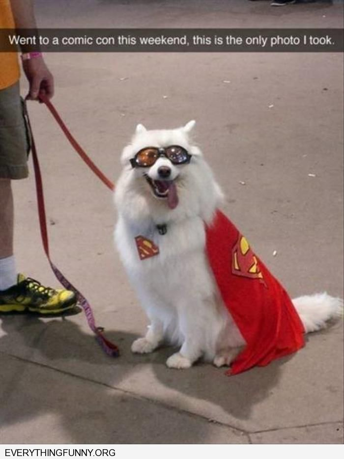 funny went to comic con and this is the only picture i took superdog