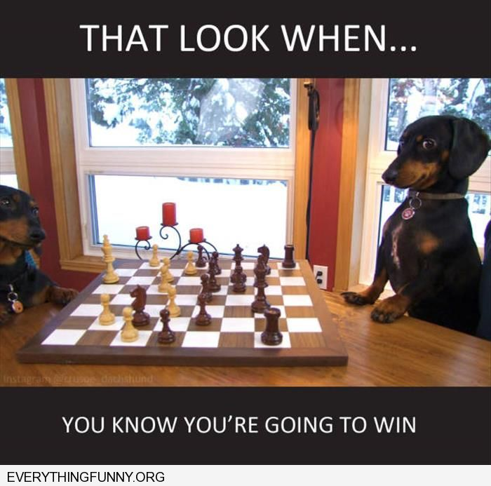 funny caption that look when you know you are going to win