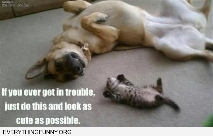 funny dog pic showing kitten how to lie on back and be cute