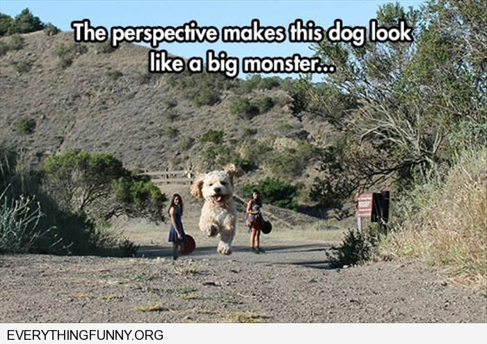 funny perspective of photograph makes dog look huge