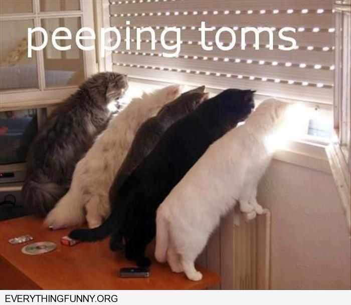 funny cats looking out window peeping toms