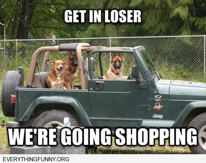 funny dog in car picture get in loser we're going shopping