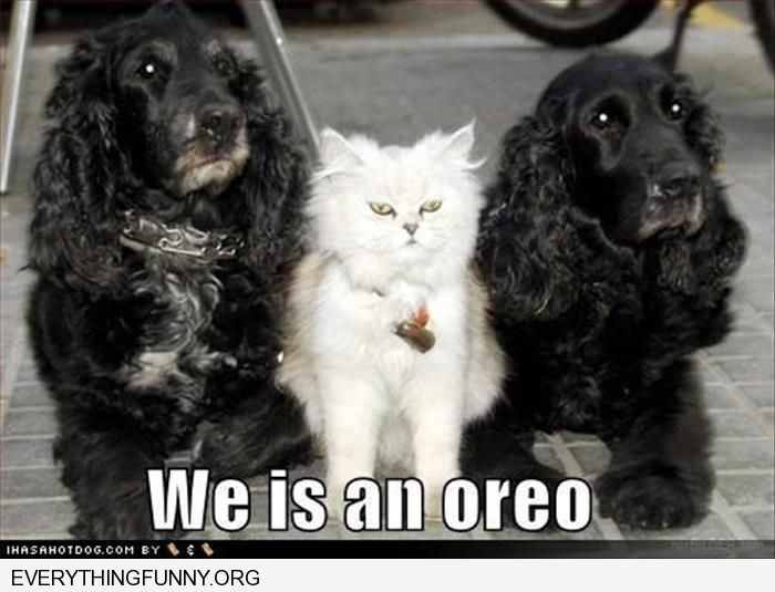 funny two black dogs one white cat we is an oreo