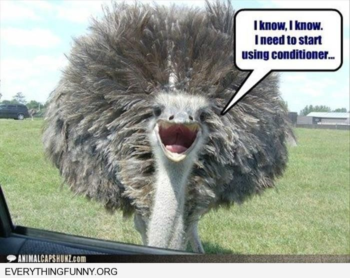 funny caption ostrich i know i need conditioner