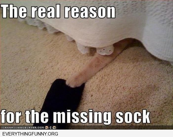 funny caption the real reason for the missing sock cat stealing it from under bed