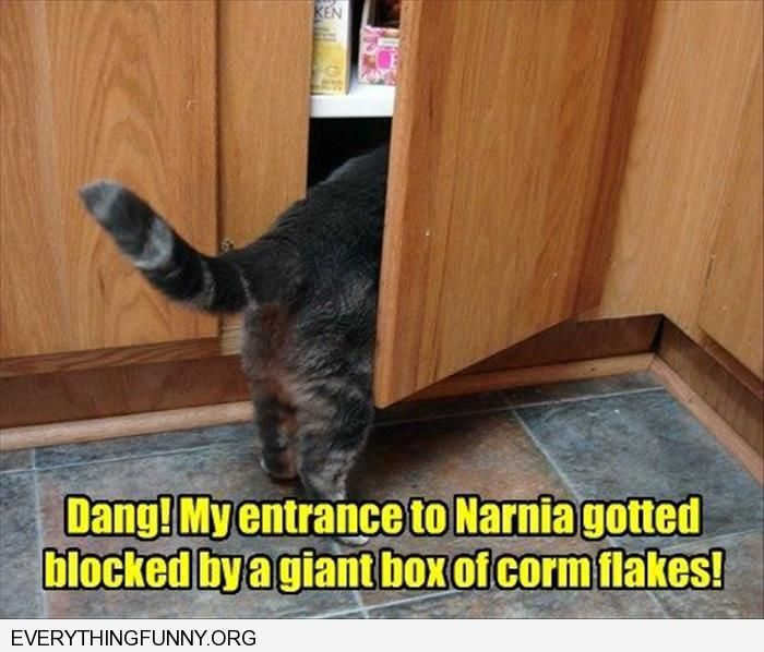 funny caption my entrance to narnia is blocked by a giant box of corn flakes