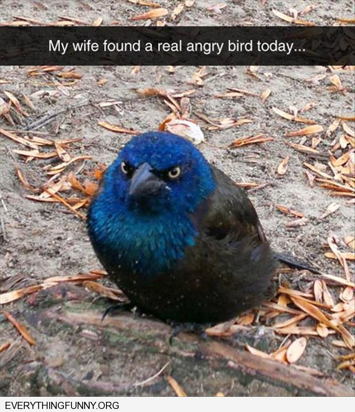funny picture my wife found an actual angry bird this morning