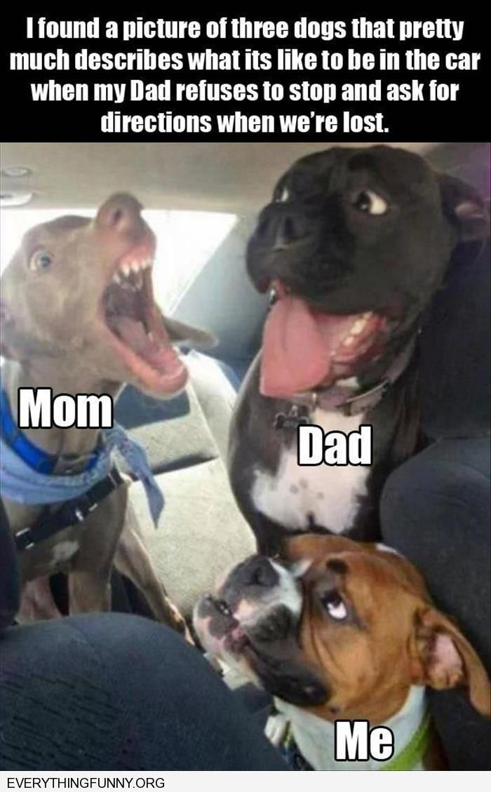 funny dog picture mom dog me like dad not asking for directions