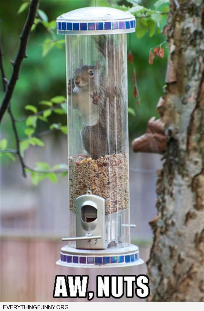 funny squirrel stuck in feeder aww nuts