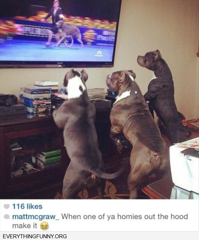 funny dogs watching dog show when someone you know makes it out of the hood