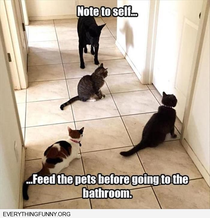 funny capiton note to self feed the pets before going to the bathroom
