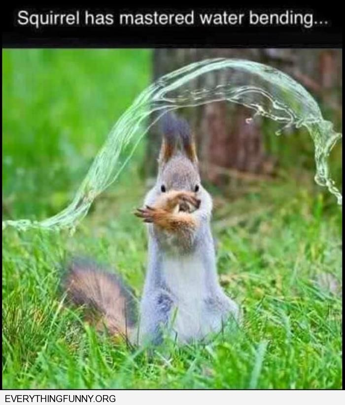 funny squirrel has mastered water bendng