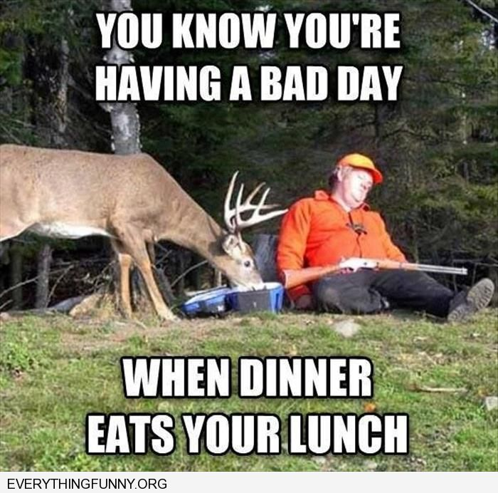 funny deer eats sleeping hunters lunch don't you hate it when dinner eats your lunch