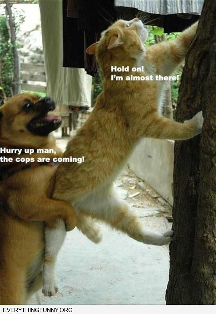 funny cat dog climbing tree hurry up the cops are coming