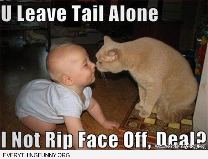 funny cat baby leave tail alone no rip face off deal